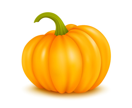 Vector illustration of large pumpkin on white background Ilustracja