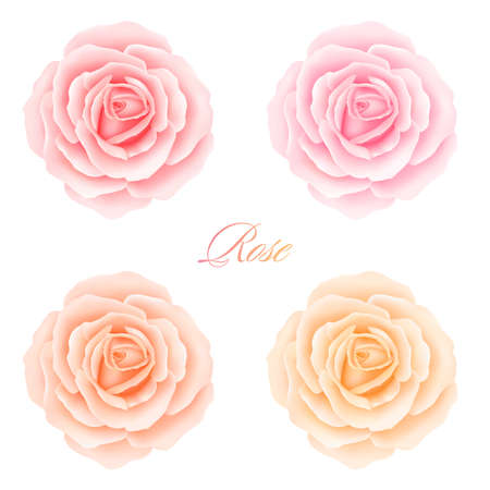 Set of Roses Flowers. Vector illustration
