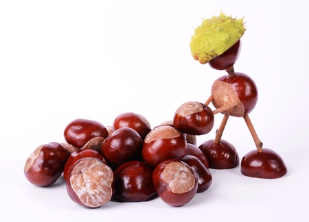 conker: Conker worker put a conker on the pile Stock Photo