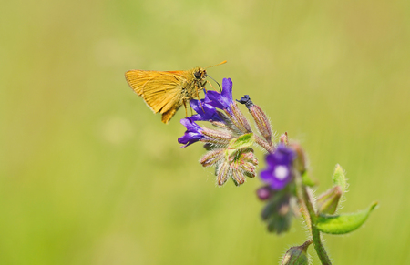 free me: Small butterfly resting on blue flower on the field Stock Photo