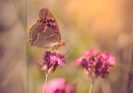 bluebell woods: Butterfly resting on wildflower a sunny day, soft photo