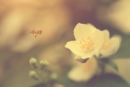 diligente: foto suave de una abeja de trabajo duro en la naturaleza, detalle