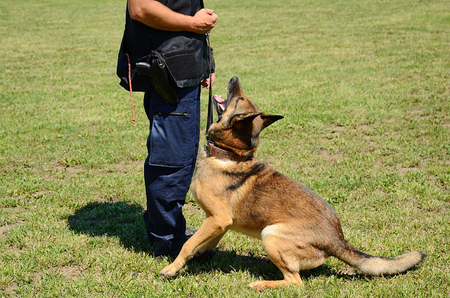 sense of security: K9 police officer with his dog in training Stock Photo