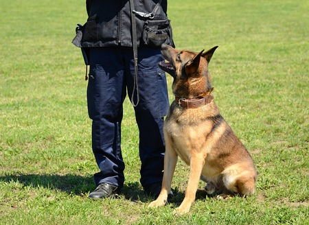 훈련에서 자신의 강아지와 함께 K9 경찰관 스톡 콘텐츠