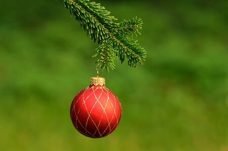 pine branch: Red ornament christmas ball on pine branch