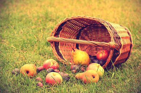 wooden basket: Vintage photo of fresh fruits after harvest