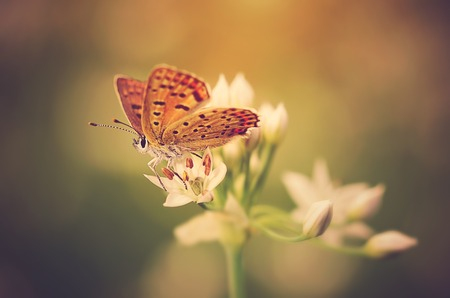 free background: Soft photo of a beautiful butterfly on flower