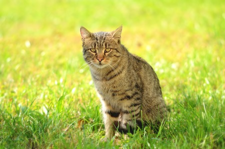 siting: Cat siting in green grass Stock Photo