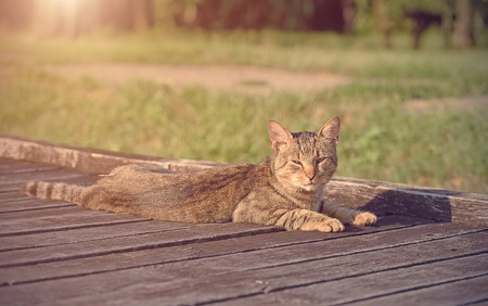 animal photo: Cat resting in the park a sunny day