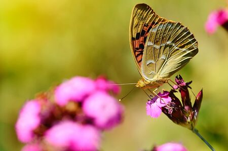 peaceful background: Butterfly resting on a wildflower