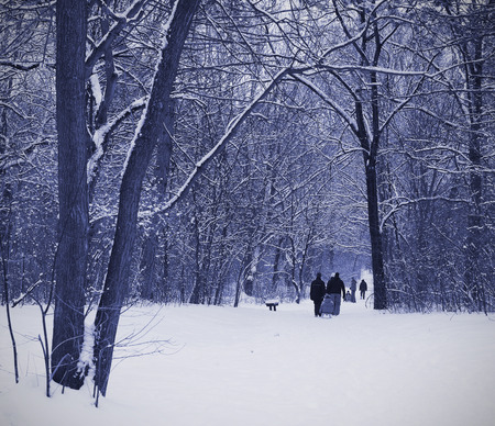 blue tone: Winter forest scene on a snowy day, blue tone Stock Photo