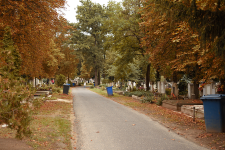 cadaver: Pathway in cemetery an autumn day, detail Stock Photo