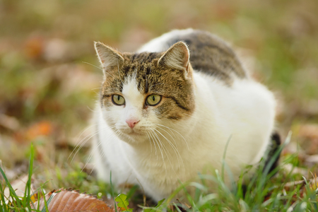 Closeup photo of a cat in the garden