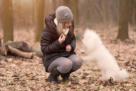 Woman training her dog in the park Stock Photo