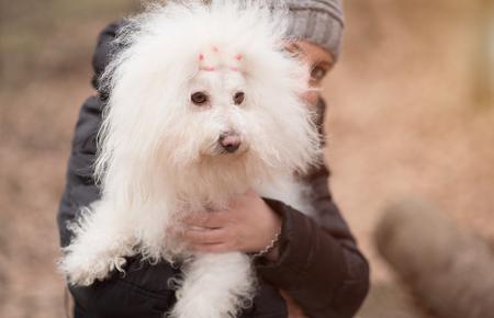 Woman holding her puppy, Bichon Havanese