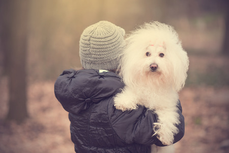 bichon bolognese: Woman holding on her shoulder her puppy, Bichon Havanese