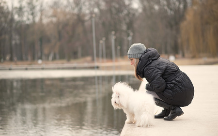 bichon bolognese: Beauty woman and her dog relax in the park