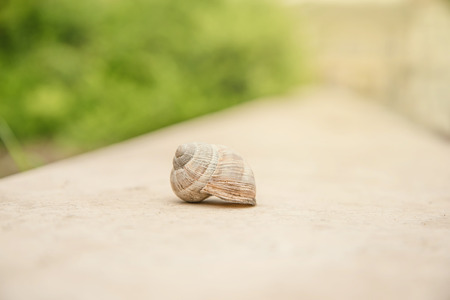 slithery: Closeup photo of snail in the nature, detail