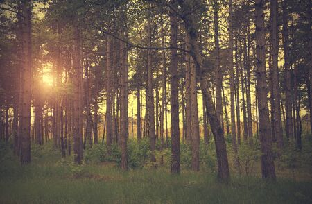 desaturated colors: Dramatic photo of a forest scene, detail