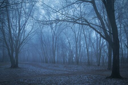 spooky forest: Spooky forest a foggy night. Blue toned photo Stock Photo