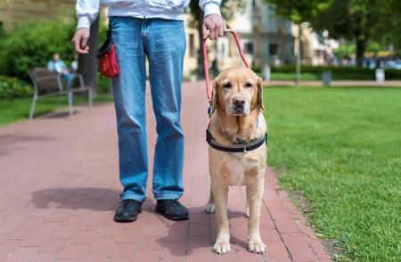盲導犬は都市の盲目の人を助けること