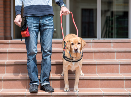 Guide dog is helping a blind man on stairs