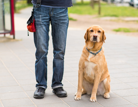 Labrador dog and owner in the city. Dog sitting in the street Stock Photo