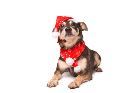 Dog in a christmas hat isolated on a white background 스톡 콘텐츠