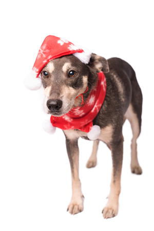 Dog in a christmas hat isolated on a white background Imagens