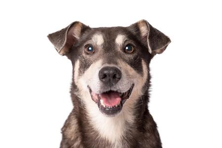 Closeup portrait photo of an adorable mongrel dog isolated on white Foto de archivo