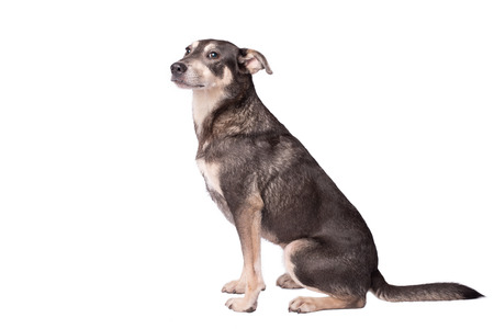 Closeup portrait photo of an adorable mongrel dog isolated on white Stock Photo