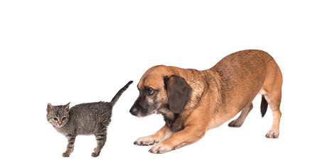Cat and dog meet each other. Isolated photo Stock Photo