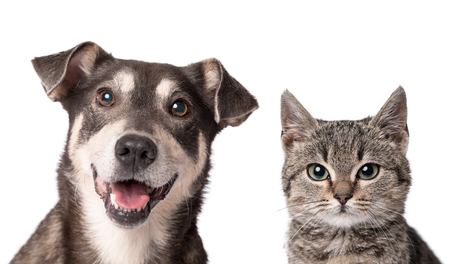 Cat and dog looking in the camera on a white background Фото со стока - 92232658