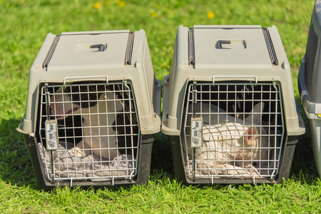 Bull terrier dogs in the portable plastic kennel