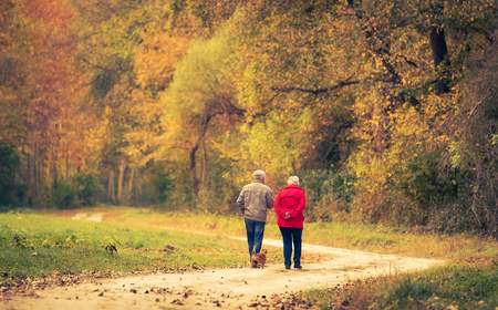 Old couple walking in the autumn forest. Standard-Bild