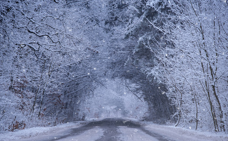Winter road in the forest. Blue toned photo