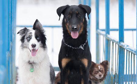 Dogs in the winter park Standard-Bild - 125802446