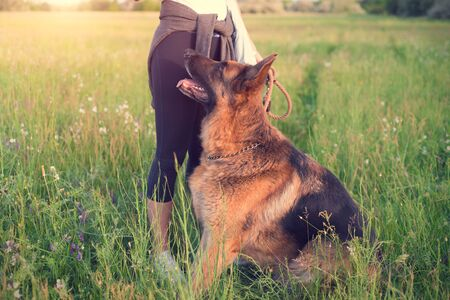 German shepherd dog with owner in the park Stok Fotoğraf