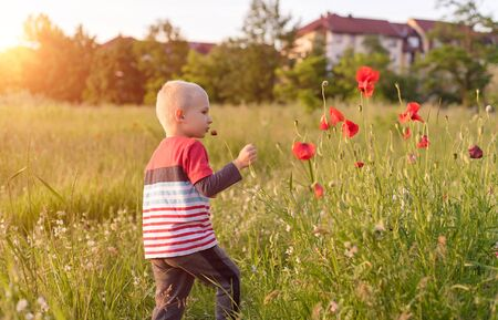 Adorable young boy play in the nature with a poppy flower