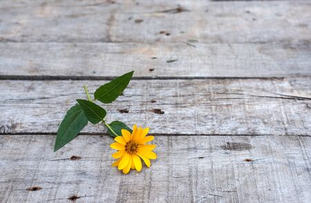 Yellow flower on a wooden background