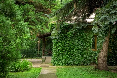 Beautiful wooden house with vlimbing ivy