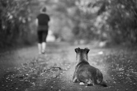 The dog is abandoned by its owner in the forest. Black and white photo