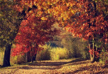 Camino de tierra en el bosque colorido en otoño Foto de archivo