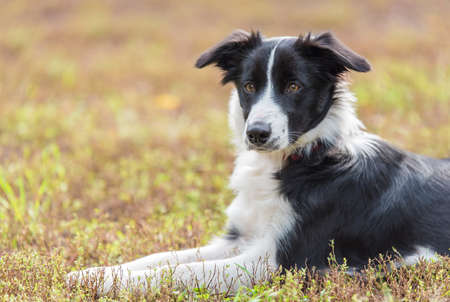Portrait of a nice St. Bernard dog in the park