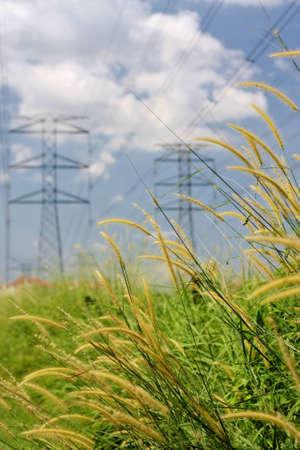 high voltage pylons over wild grass