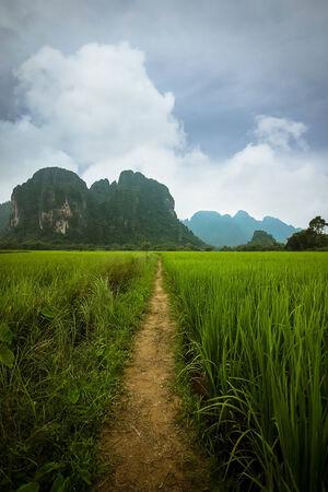 lao: Chemin Rizi�re, Vang Vieng, Laos