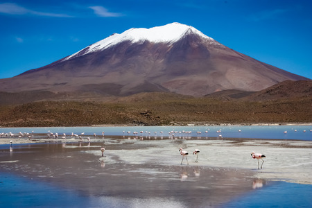 eduardo: Flamingos on lake in Andes, the southern part of Bolivia