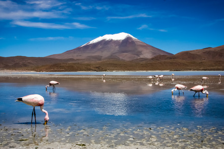 Flamingos on lake in Andes, the southern part of Bolivia