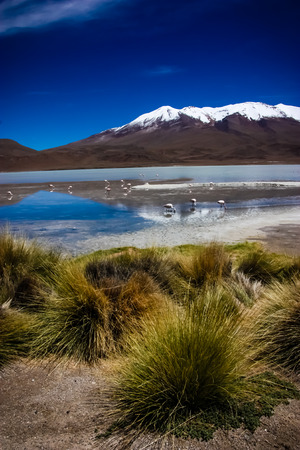 celeste: Flamingos on lake in Andes, the southern part of Bolivia