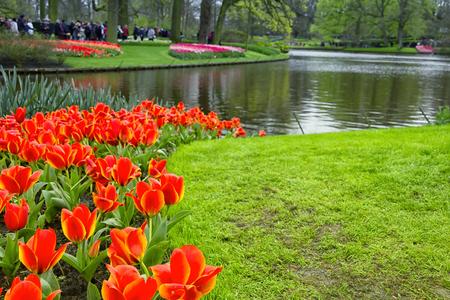 Tulips in Keukenhof, the Netherlands Banco de Imagens